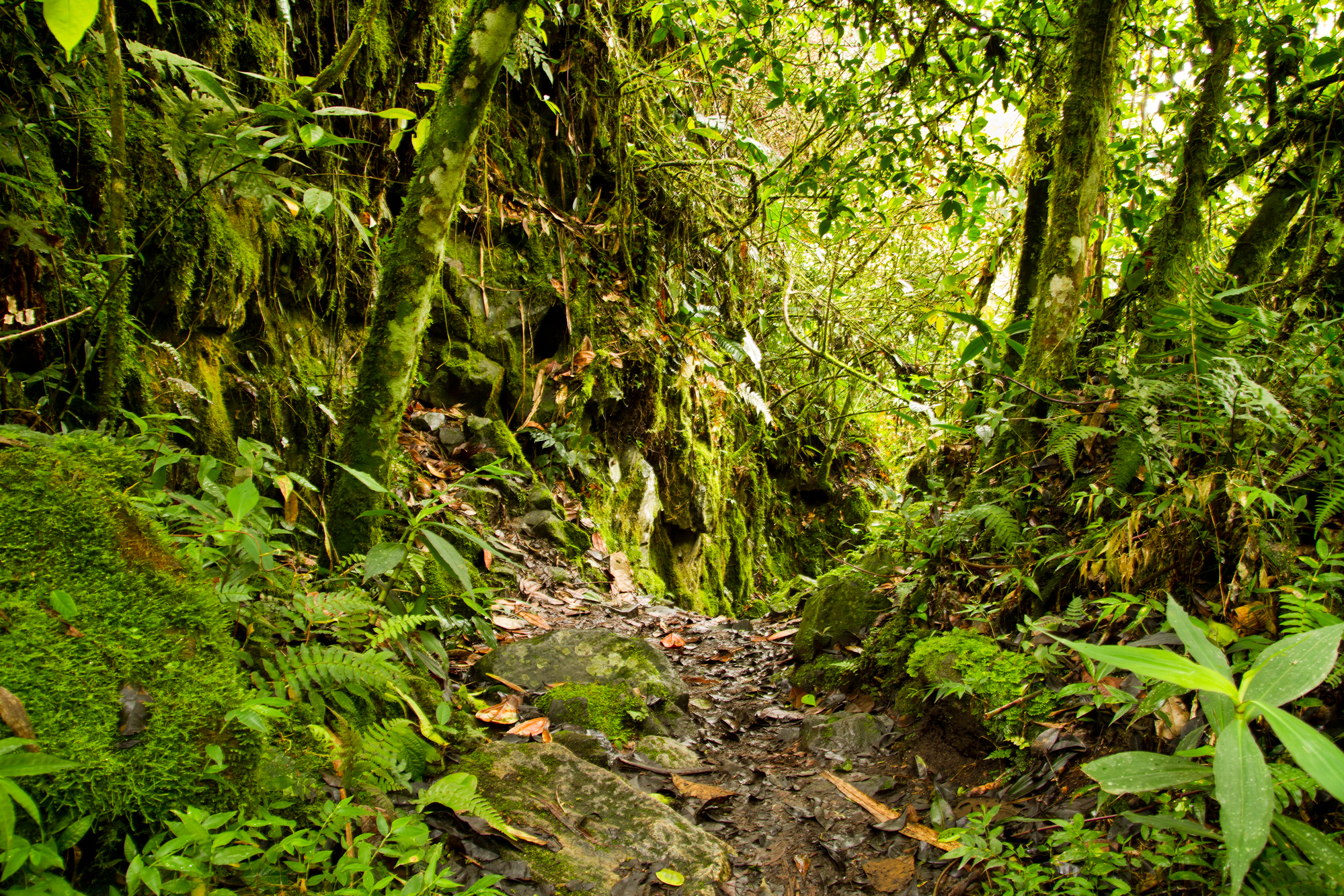 Interior of tropical rainforest in the National Park, Ecuador