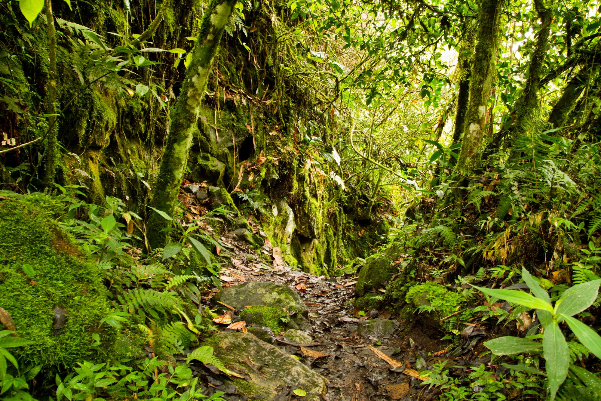Interior of tropical rainforest in the National Park, Ecuador